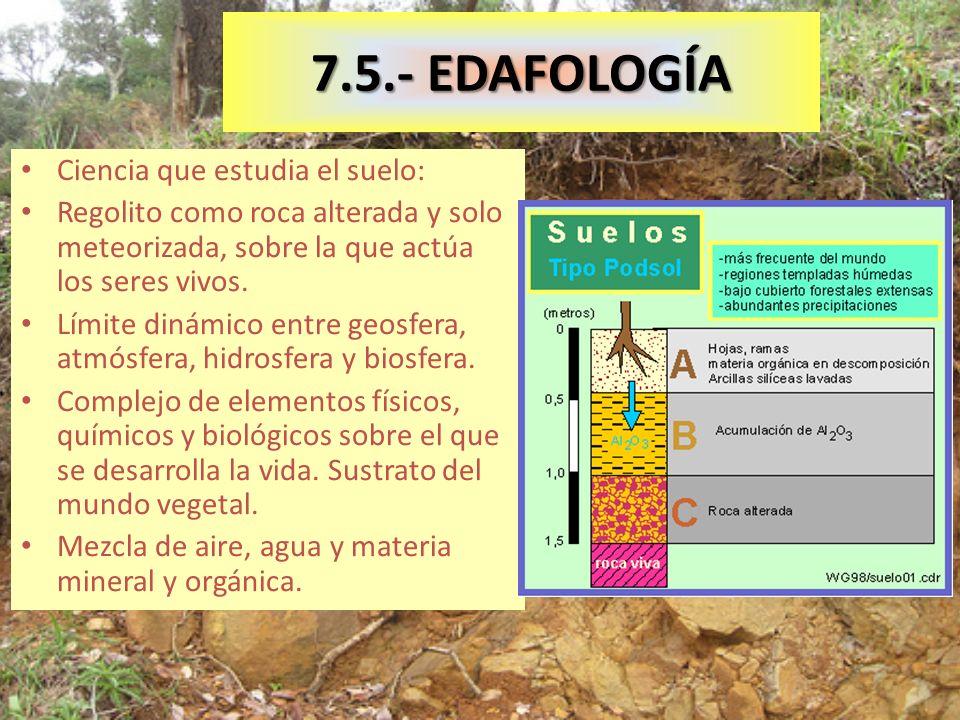 7.5.- EDAFOLOGÍA Ciencia que estudia el suelo: