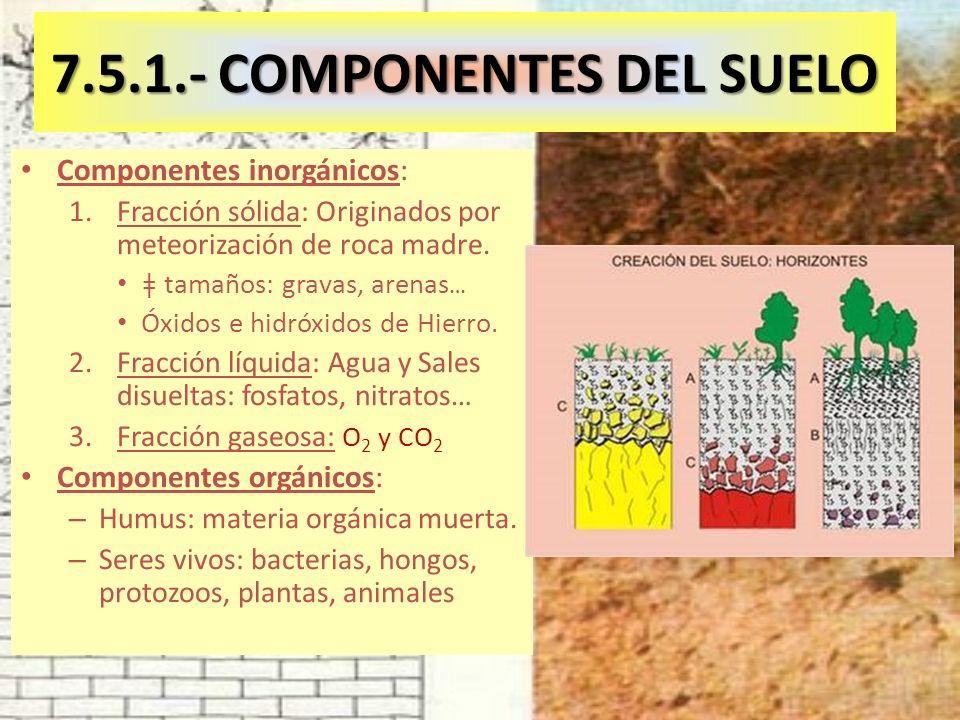 7.5.1.- COMPONENTES DEL SUELO