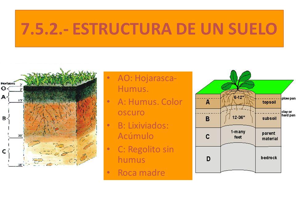 7.5.2.- ESTRUCTURA DE UN SUELO