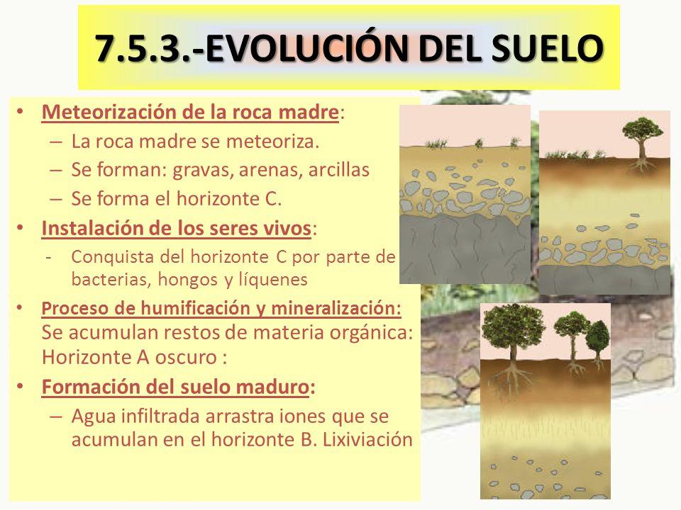 7.5.3.-EVOLUCIÓN DEL SUELO Meteorización de la roca madre:
