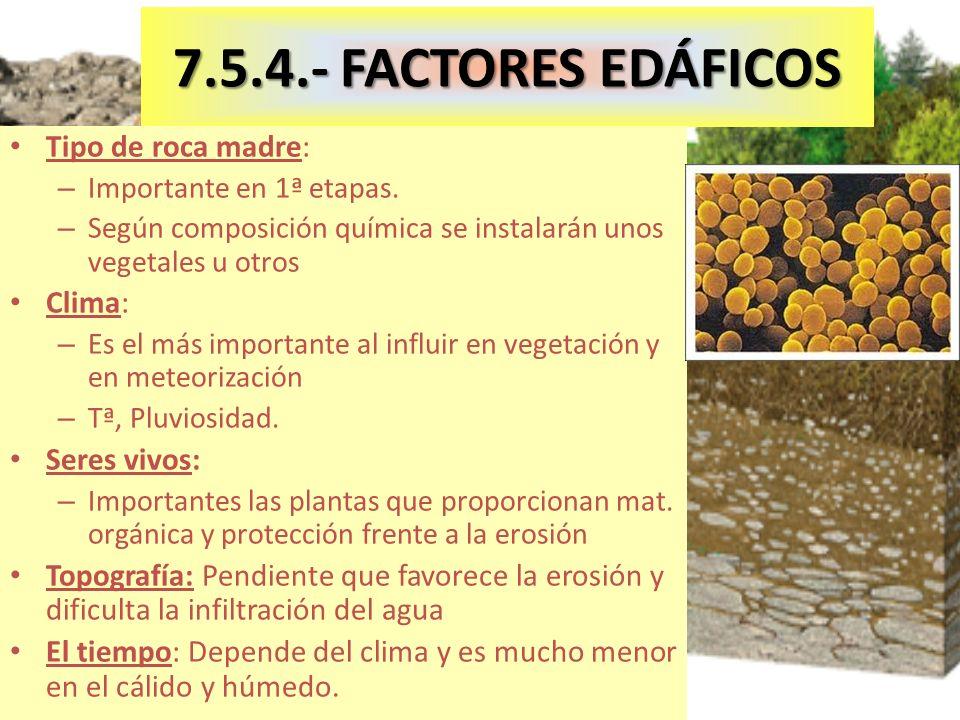 7.5.4.- FACTORES EDÁFICOS Tipo de roca madre: Clima: Seres vivos: