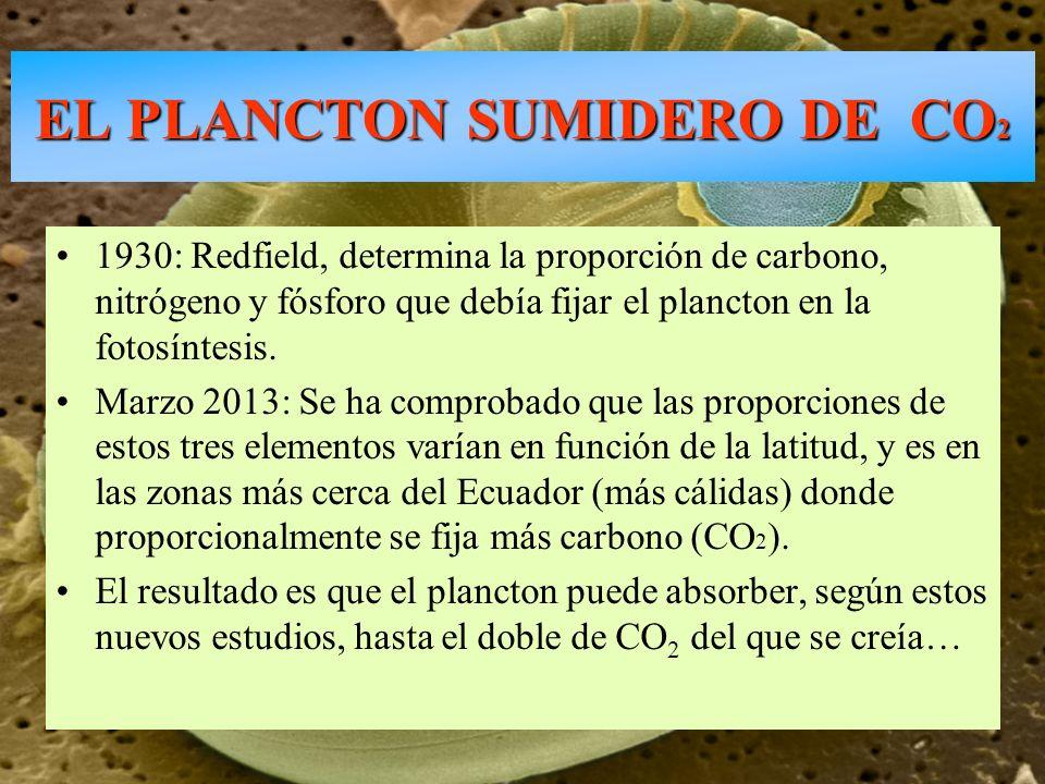 EL PLANCTON SUMIDERO DE CO2