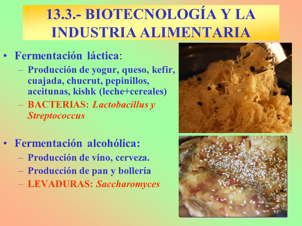 13.3.- BIOTECNOLOGÍA Y LA INDUSTRIA ALIMENTARIA