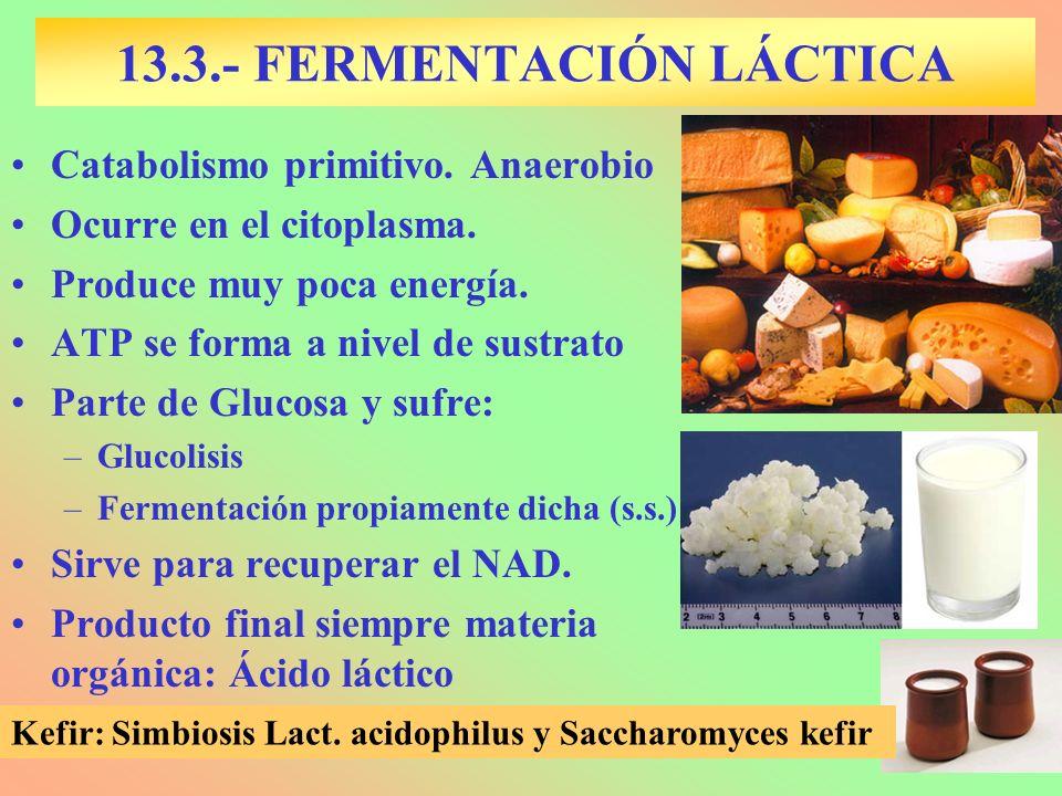 13.3.- FERMENTACIÓN LÁCTICA