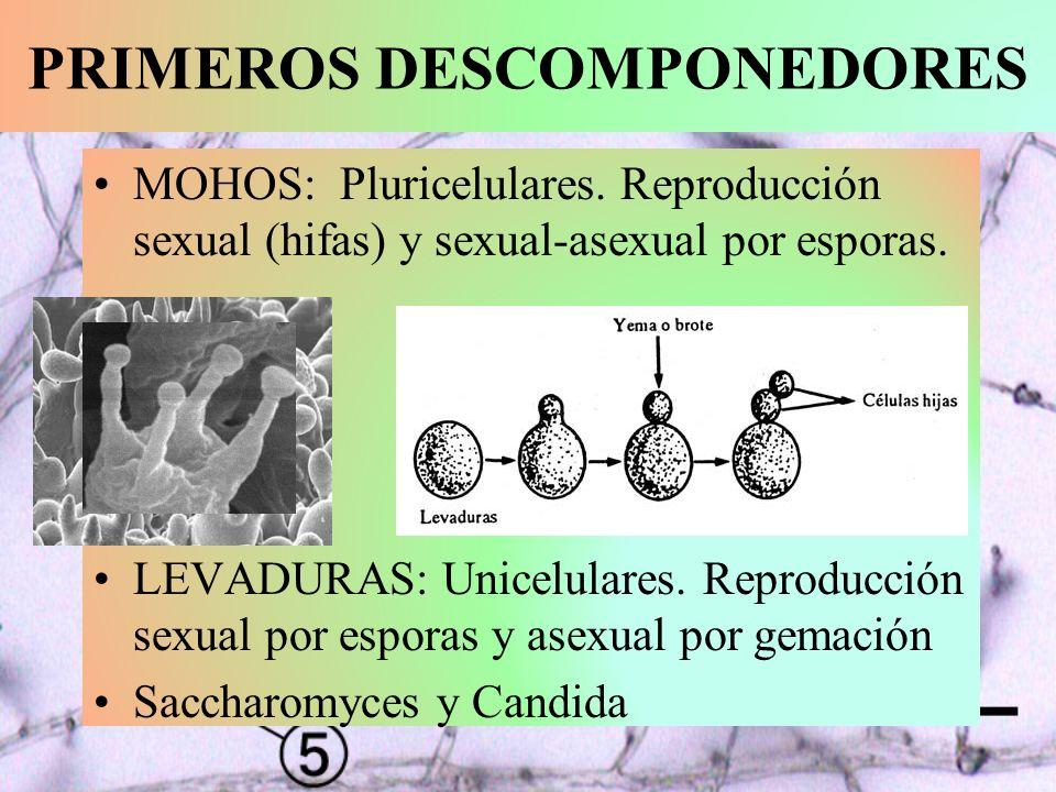 PRIMEROS DESCOMPONEDORES