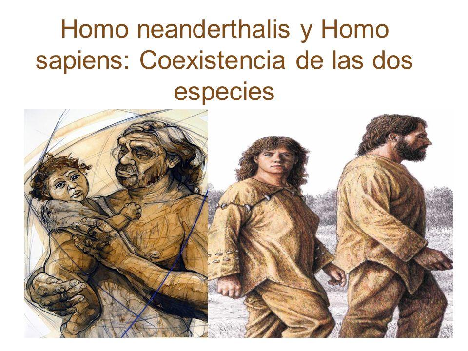 Homo neanderthalis y Homo sapiens: Coexistencia de las dos especies