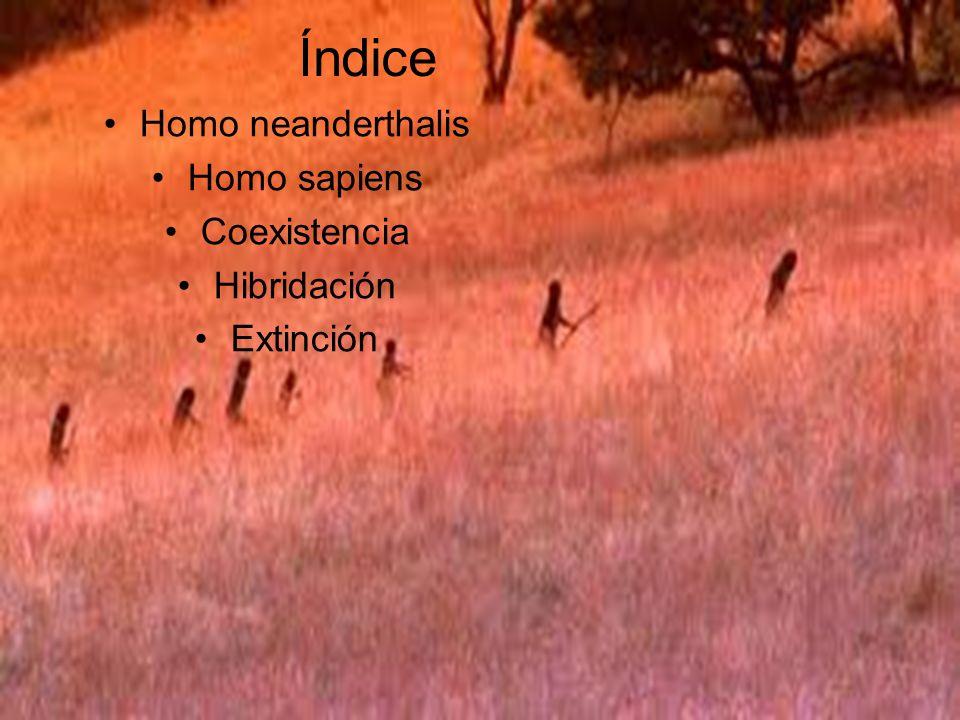 Índice Homo neanderthalis Homo sapiens Coexistencia Hibridación