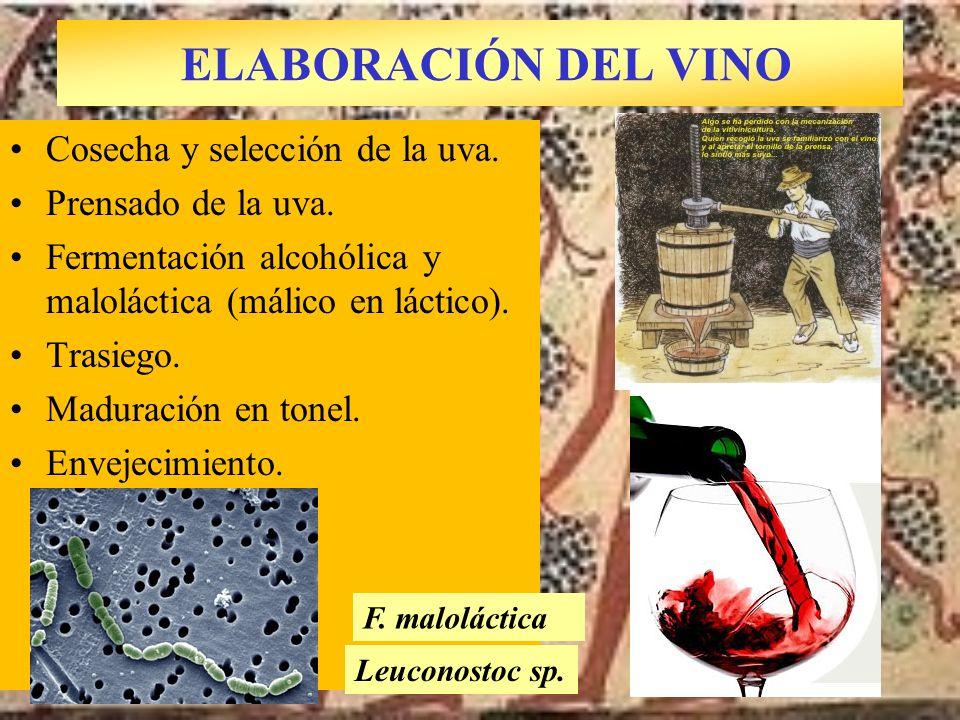 ELABORACIÓN DEL VINO Cosecha y selección de la uva.