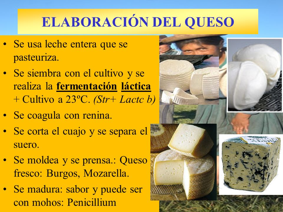 ELABORACIÓN DEL QUESO Se usa leche entera que se pasteuriza.