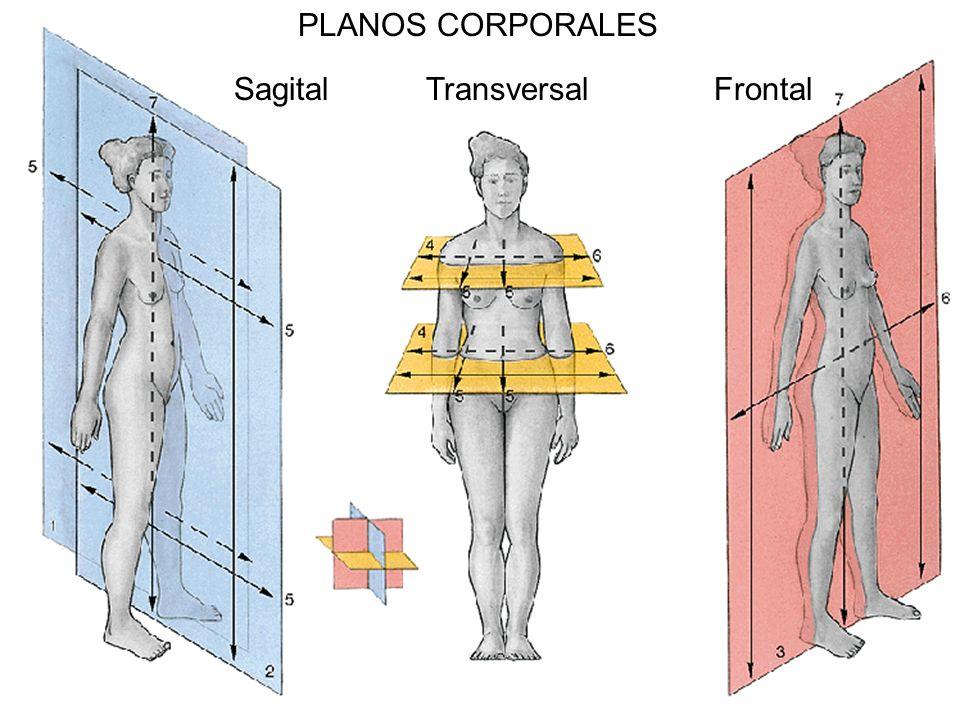 PLANOS CORPORALES Sagital Transversal Frontal
