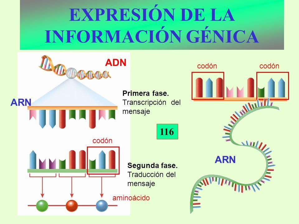 EXPRESIÓN DE LA INFORMACIÓN GÉNICA