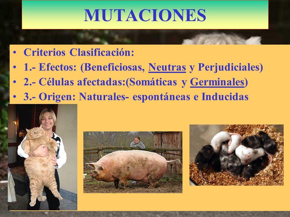 MUTACIONES Criterios Clasificación: