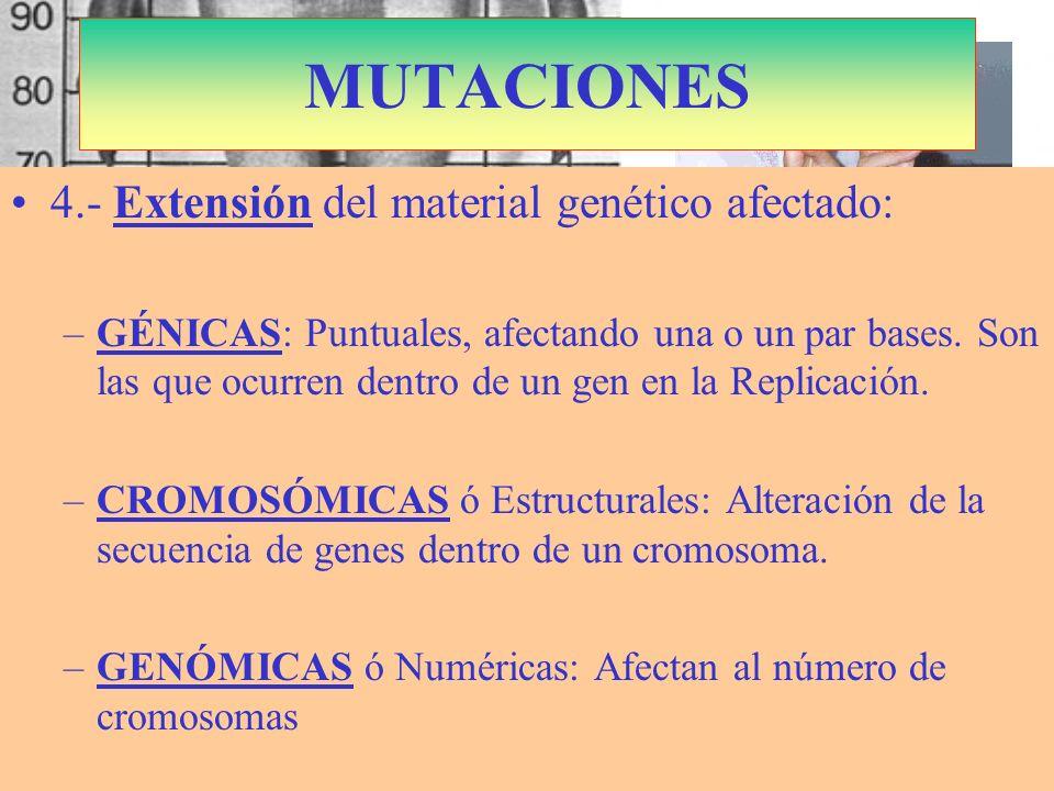 S. Marfán: Cromosoma 15 Dominante Fibrilina