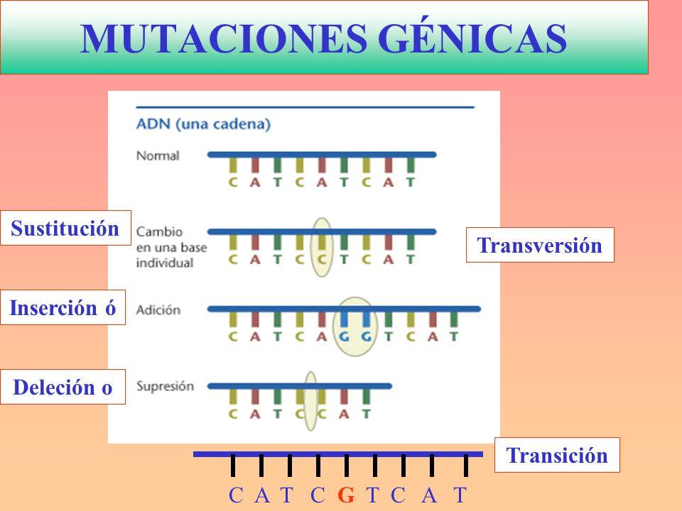MUTACIONES GÉNICAS Sustitución Transversión Inserción ó Deleción o