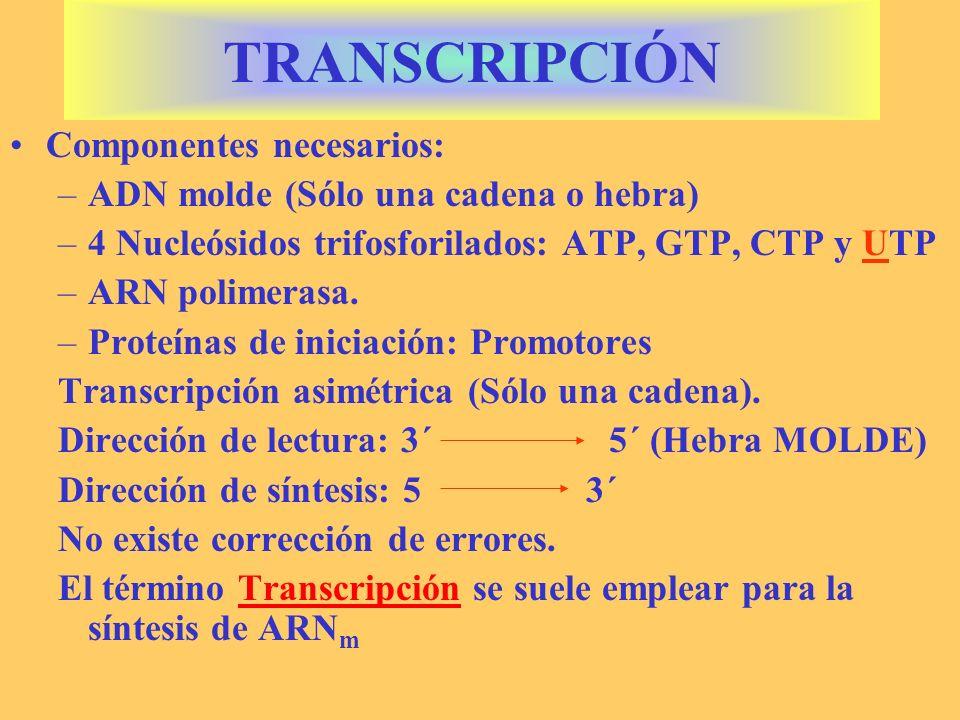 TRANSCRIPCIÓN Componentes necesarios: