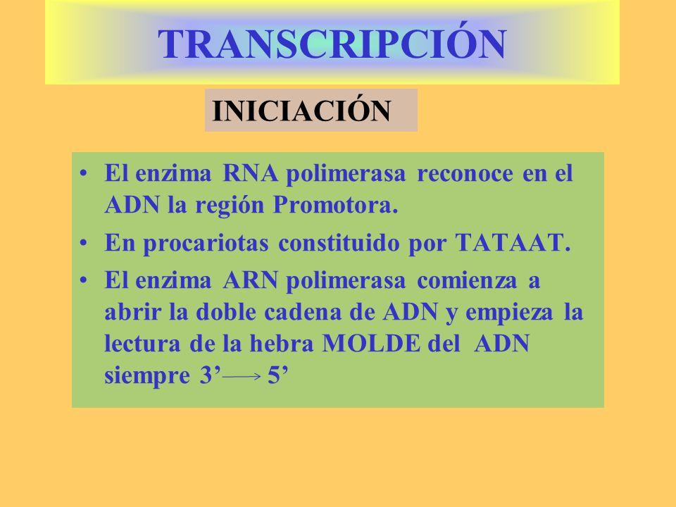 TRANSCRIPCIÓN INICIACIÓN
