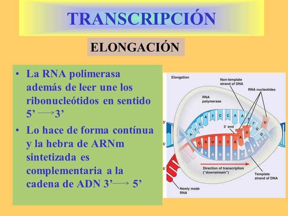 TRANSCRIPCIÓN ELONGACIÓN