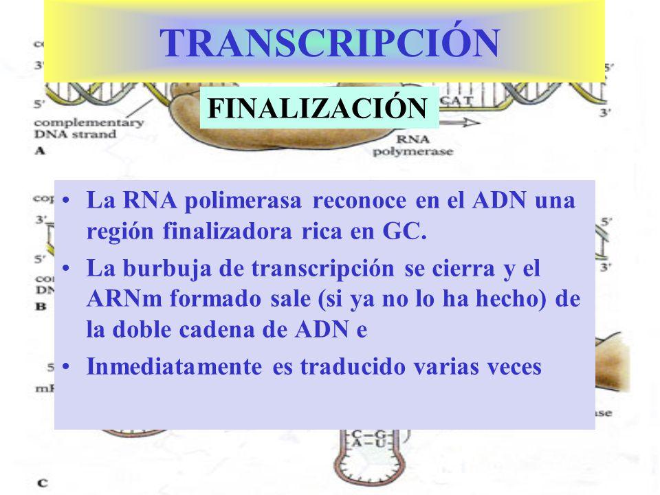 TRANSCRIPCIÓN FINALIZACIÓN
