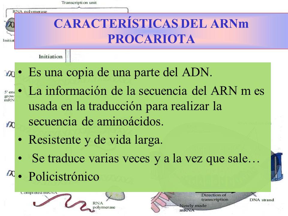 CARACTERÍSTICAS DEL ARNm PROCARIOTA