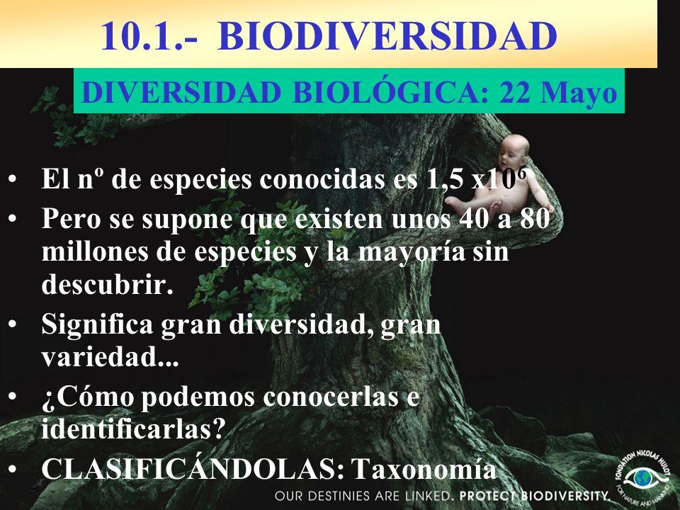 10.1.- BIODIVERSIDAD DIVERSIDAD BIOLÓGICA: 22 Mayo