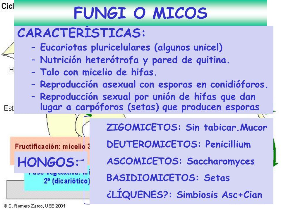 FUNGI O MICOS CARACTERÍSTICAS: HONGOS: