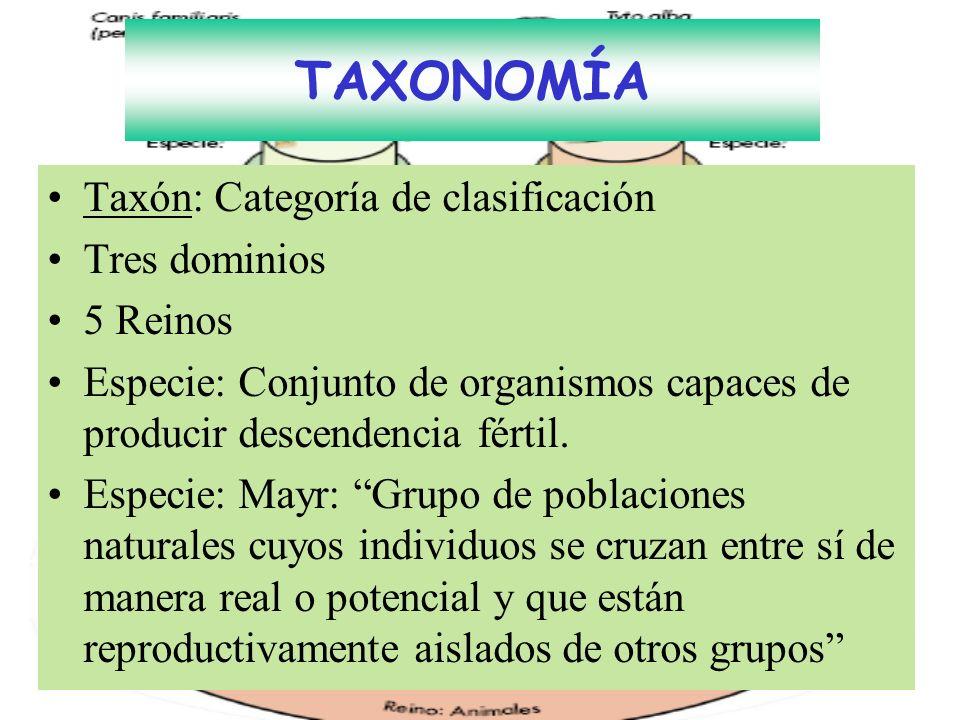 TAXONOMÍA Taxón: Categoría de clasificación Tres dominios 5 Reinos