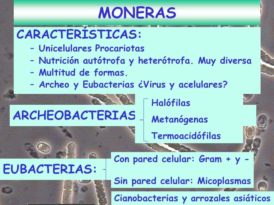MONERAS CARACTERÍSTICAS: ARCHEOBACTERIAS: EUBACTERIAS: