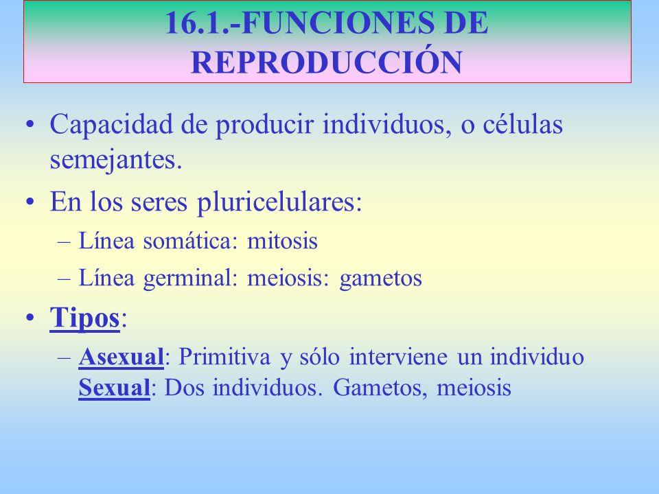16.1.-FUNCIONES DE REPRODUCCIÓN