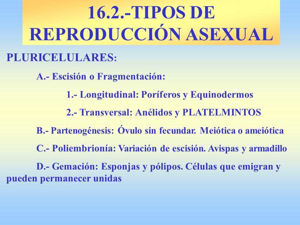 16.2.-TIPOS DE REPRODUCCIÓN ASEXUAL