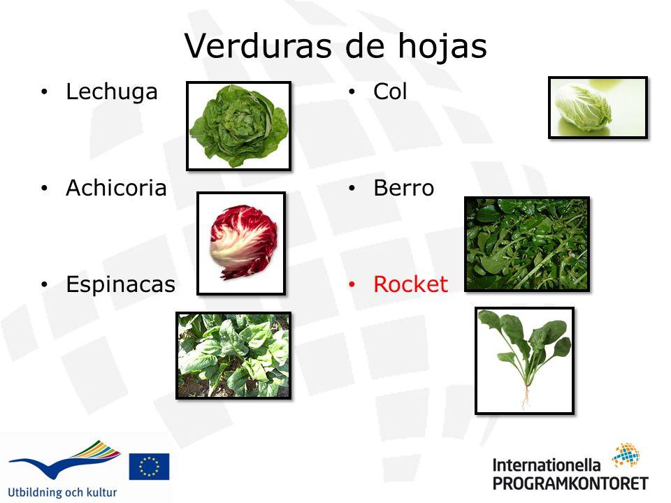 Verduras de hojas Lechuga. Achicoria. Espinacas. Col. Berro. Rocket.