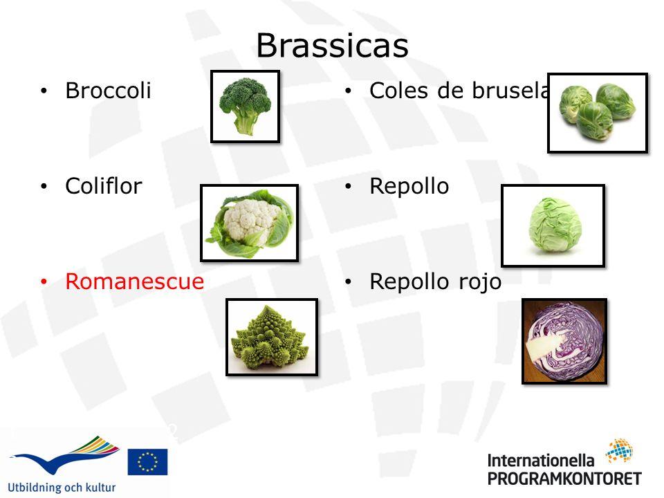 Brassicas Broccoli Coliflor Romanescue Coles de bruselas Repollo