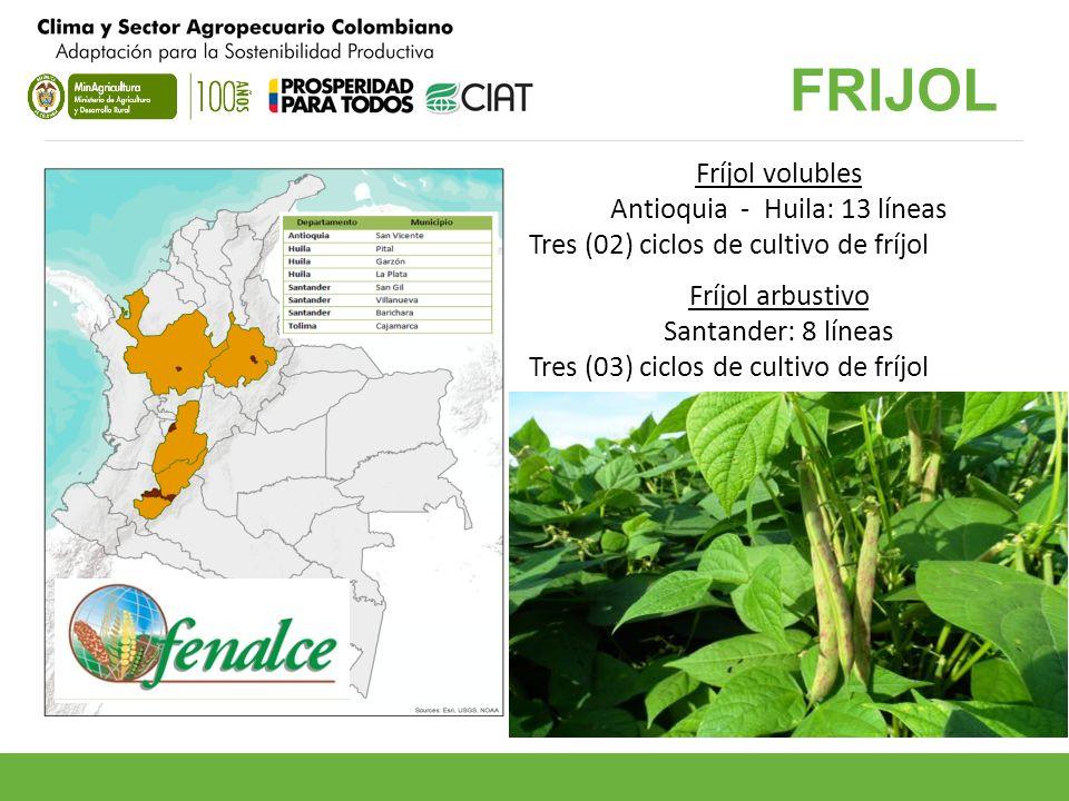 Antioquia - Huila: 13 líneas