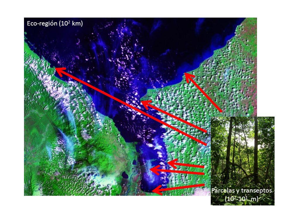 Eco-región (102 km) Parcelas y transeptos (102-101 m)