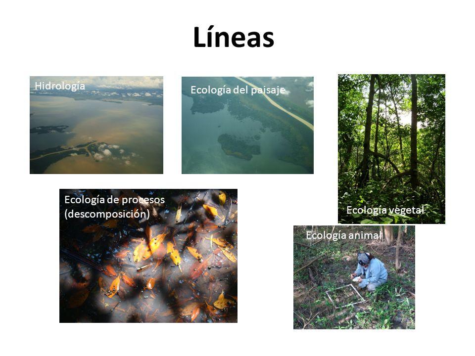 Líneas Hidrología Ecología del paisaje Ecología de procesos