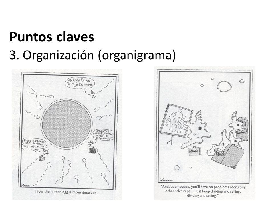 Puntos claves 3. Organización (organigrama)