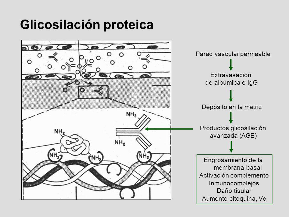 Glicosilación proteica