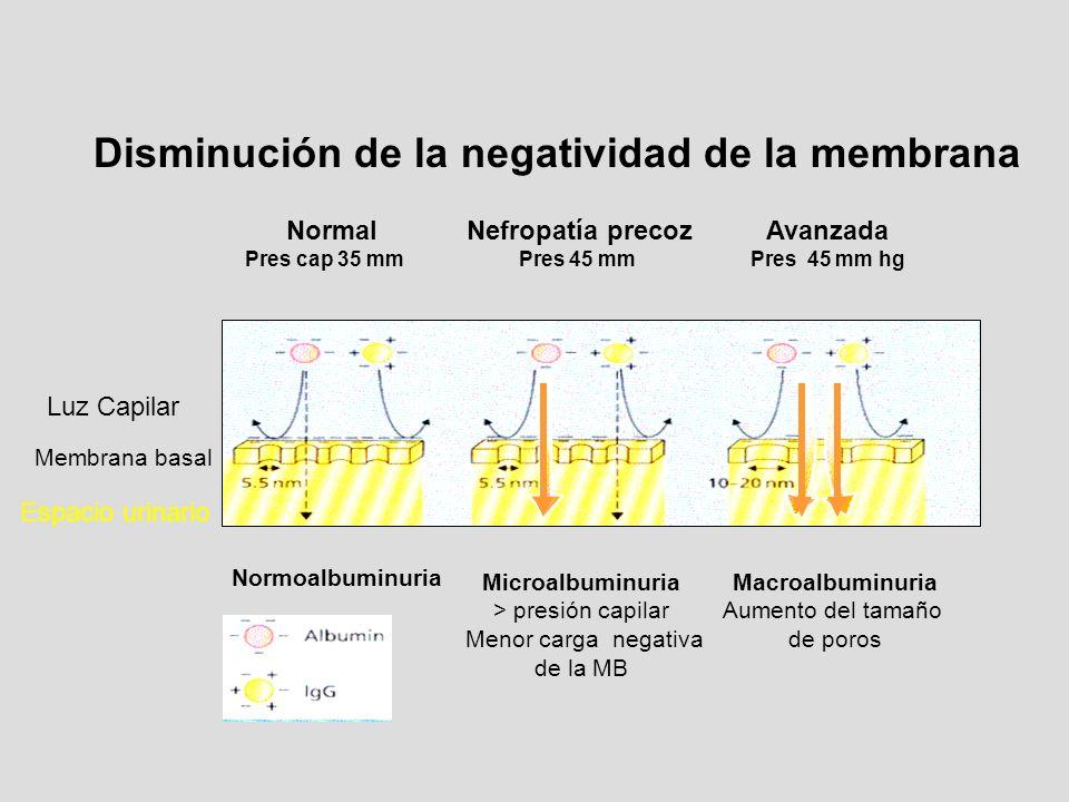 Disminución de la negatividad de la membrana