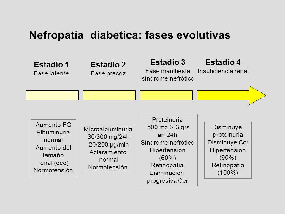 Nefropatía diabetica: fases evolutivas