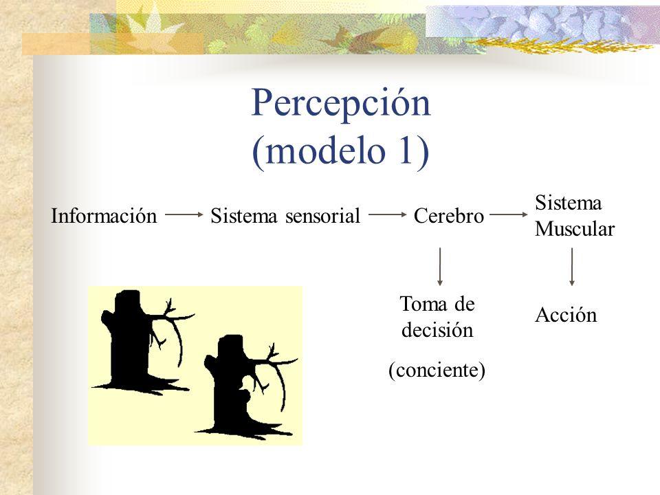 Percepción (modelo 1) Sistema Muscular Información Sistema sensorial