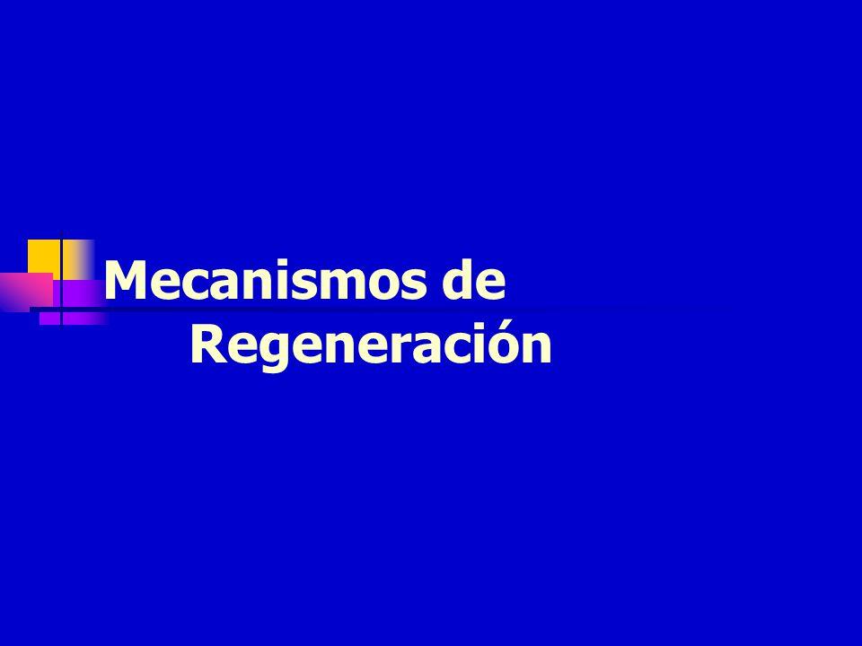 Mecanismos de Regeneración