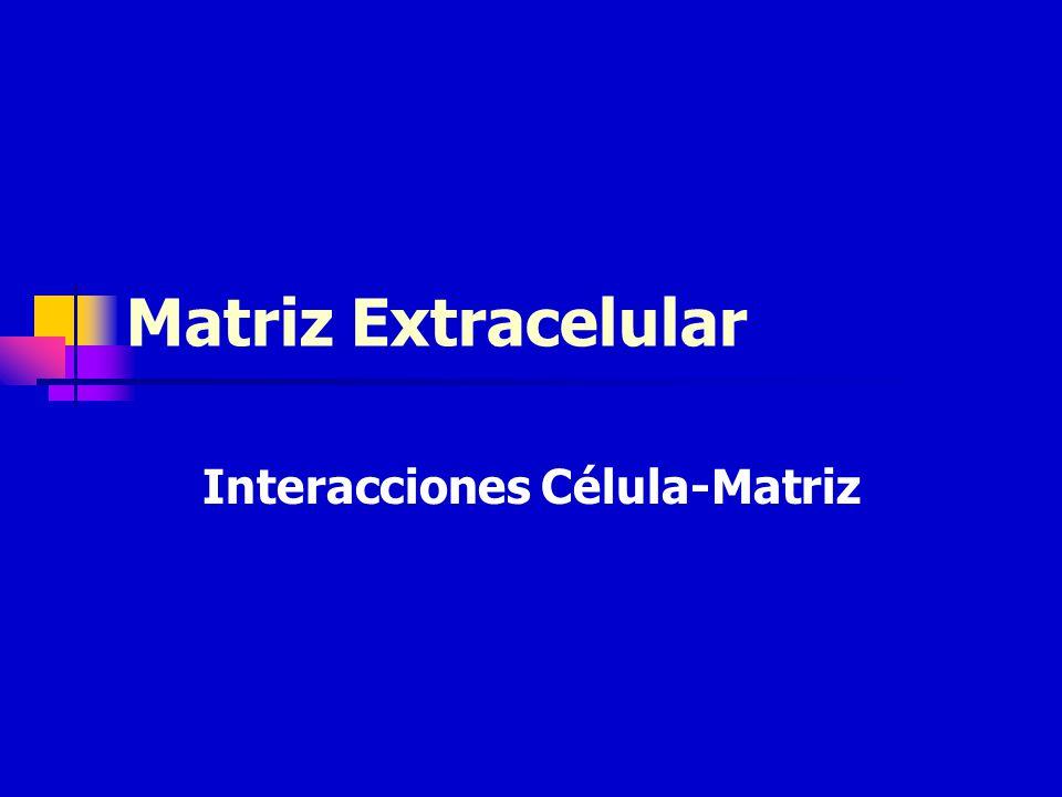 Interacciones Célula-Matriz