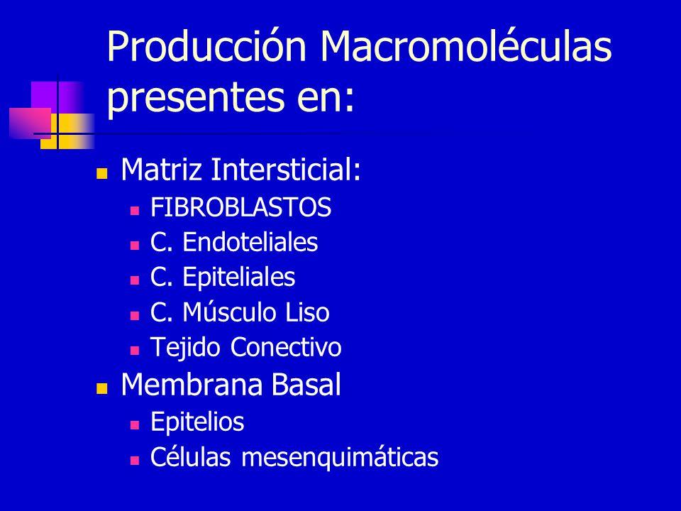 Producción Macromoléculas presentes en: