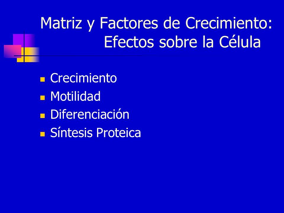 Matriz y Factores de Crecimiento: Efectos sobre la Célula