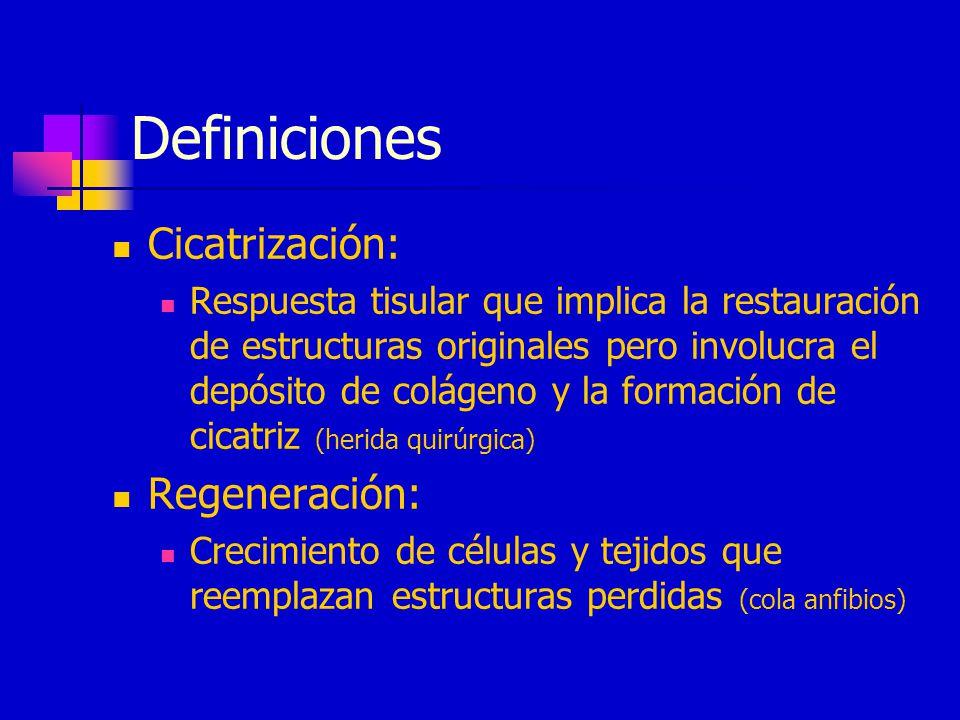 Definiciones Cicatrización: Regeneración: