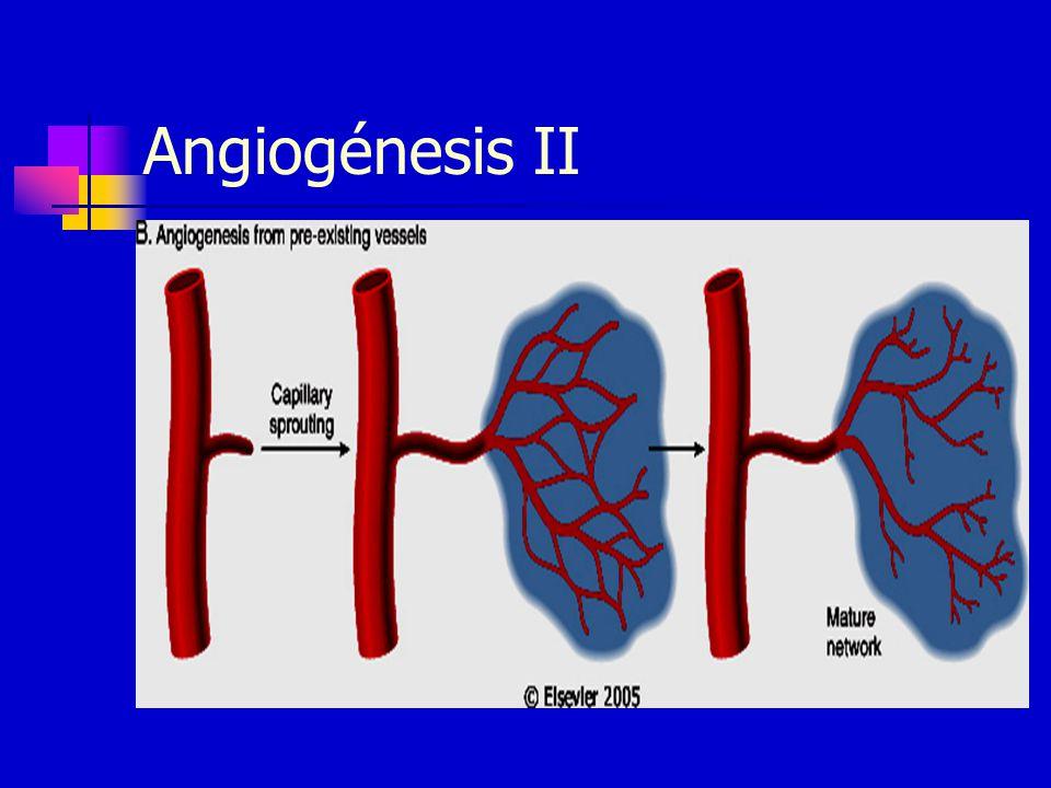 Angiogénesis II