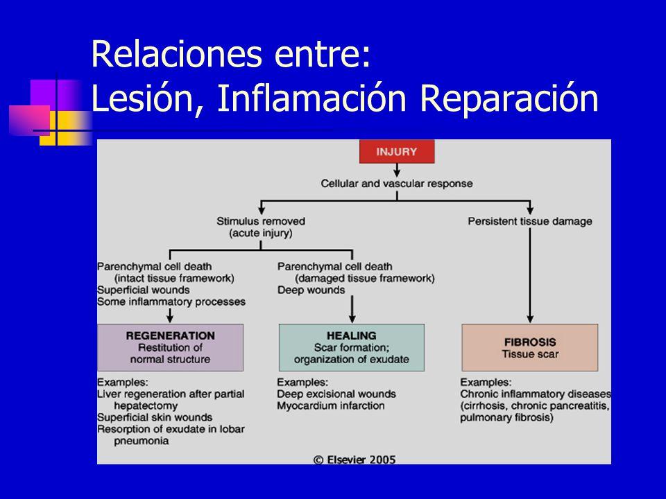 Relaciones entre: Lesión, Inflamación Reparación
