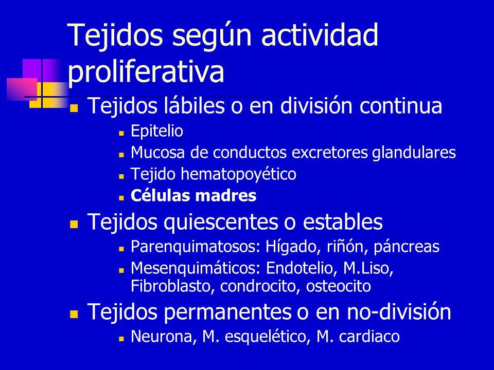 Tejidos según actividad proliferativa