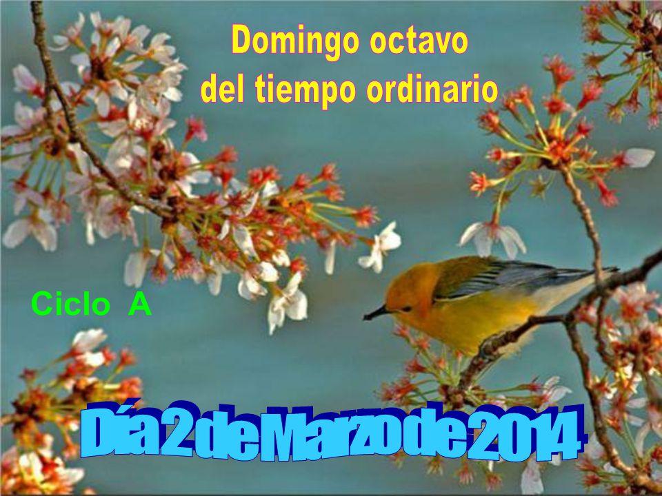 Domingo octavo del tiempo ordinario Ciclo A Día 2 de Marzo de 2014