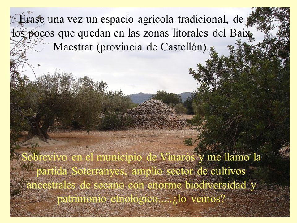 SOTERRANYES BAIXES VINARÒS (CS)-España