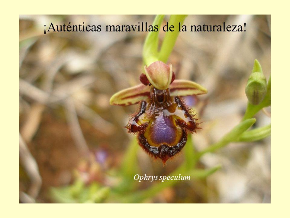 ¡Auténticas maravillas de la naturaleza!